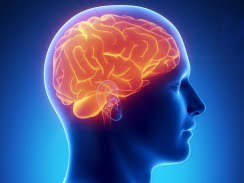 Fifth Business Essay The Art Of Tricking The Brain Persuasive Essay Sample High School also Is A Research Paper An Essay Essay About Porn Written For College English Class  Your Brain On Porn Narrative Essay Thesis