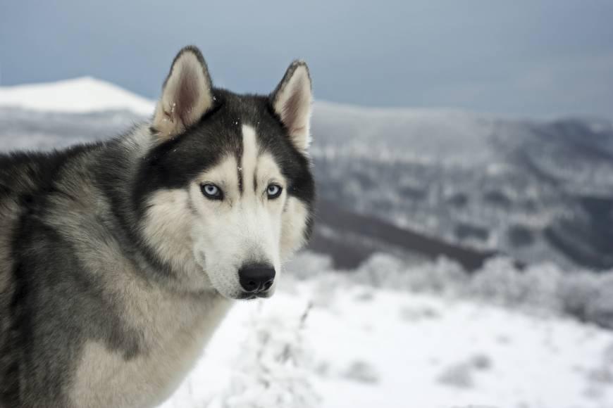 inuit.123.jpg