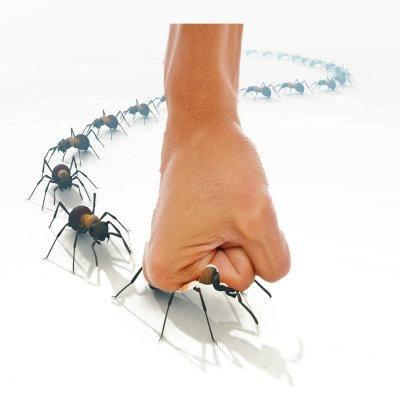 ant.crush_.jpg