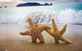 2starfish2.jpg