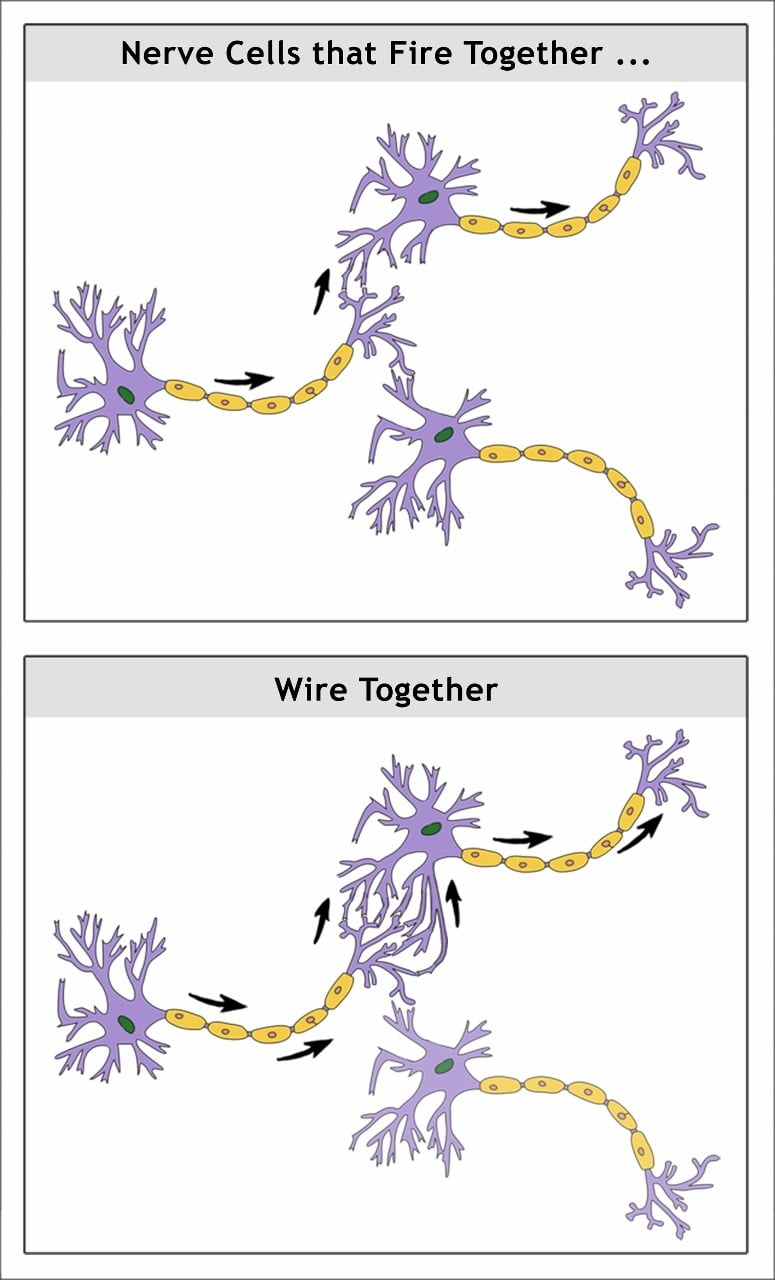 Nerve cells that fire together, wire together. This happens due to porn viewing, as well as in other learning