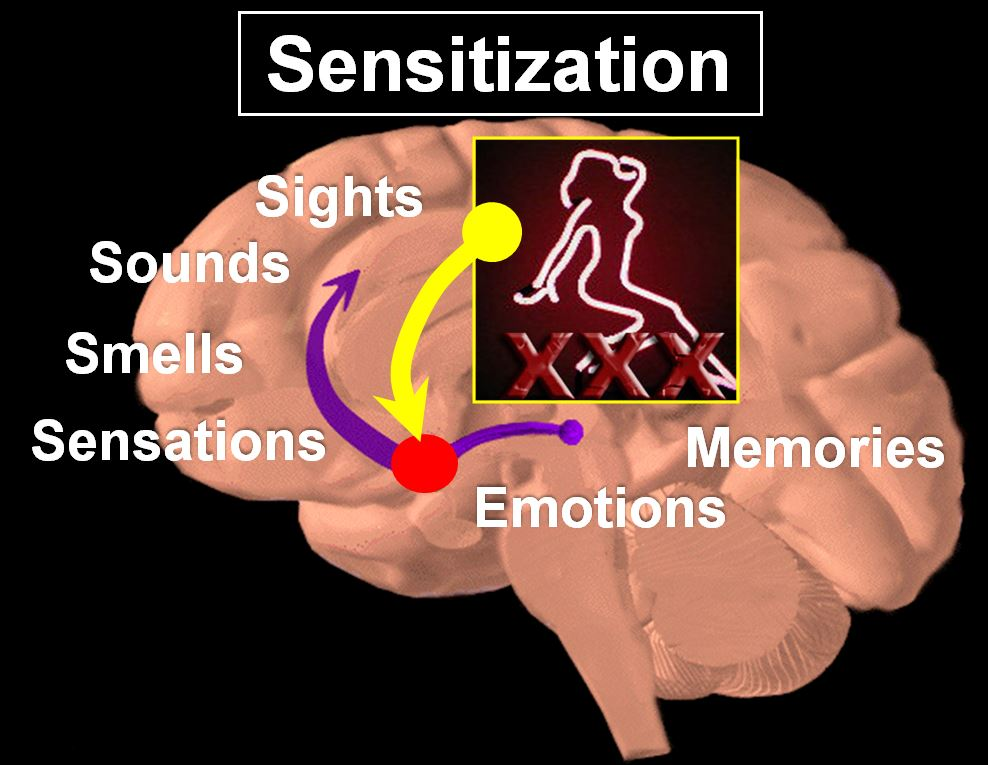 Brain sensitization to sights, sounds, smells and sensations while viewing porn