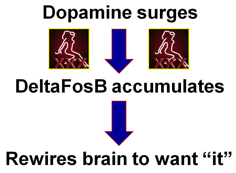 "Dopamine surges while watching porn, then DeltaFosB accumulates, then it rewires the brain to want ""it"""