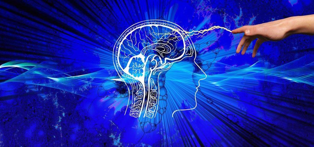 sexualitatea și creierul